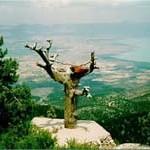 Bediuzzaman's Tree